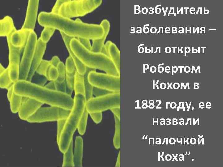 """Возбудитель заболевания – был открыт Робертом Кохом в 1882 году, ее назвали """"палочкой Коха""""."""