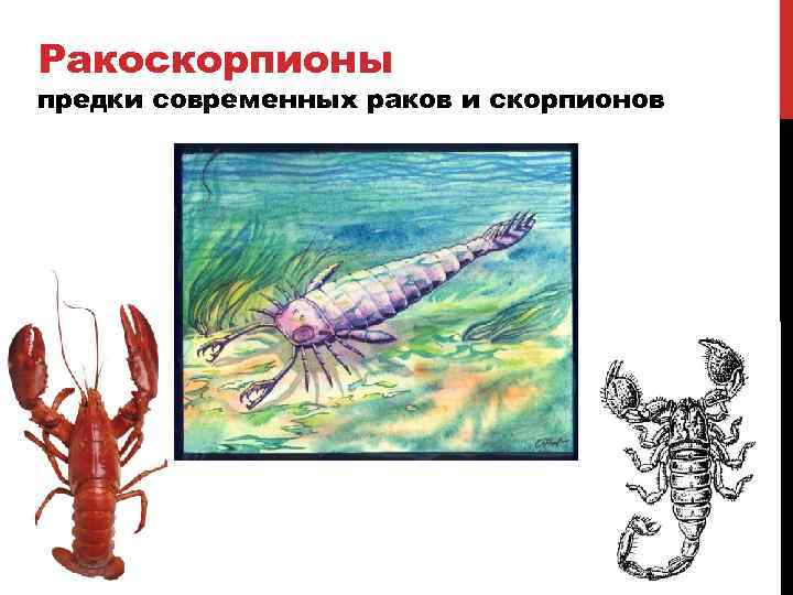 Характеристика представителей водной стихии и их совместимость далее.каким бы странным со стороны ни выглядел союз импульсивного скорпиона и мягкого и уравновешенного рака, он имеет очень хорошие перспективы на счастливое и долгое продолжение.