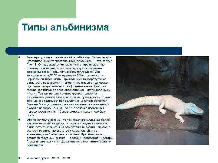 Типы альбинизма l l l Температуро-чувствительный альбинизм. Температурочувствительный (теплозависимый) альбинизм — это подтип ГКА