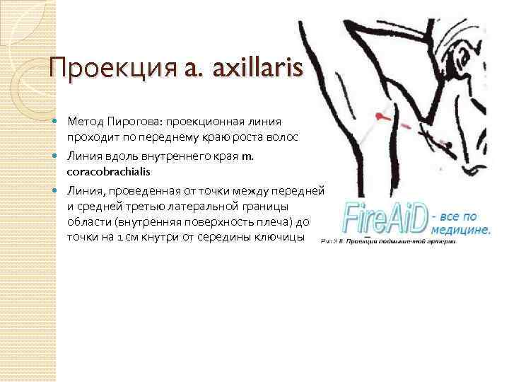 Проекция a. axillaris Метод Пирогова: проекционная линия проходит по переднему краю роста волос Линия