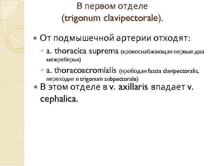 В первом отделе (trigonum clavipectorale). От подмышечной артерии отходят: ◦ a. thoracica suprema (кровоснабжающая