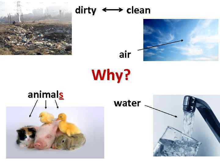 dirty clean air Why? animals water