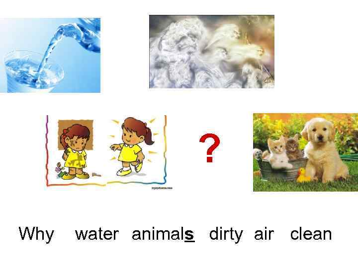 ? Why water animals dirty air clean