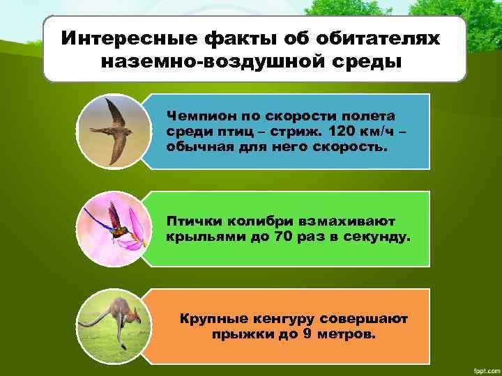 Интересные факты об обитателях наземно-воздушной среды Чемпион по скорости полета среди птиц – стриж.