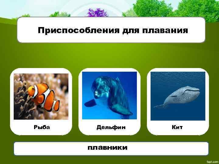 Приспособления для плавания Рыба Дельфин плавники Кит