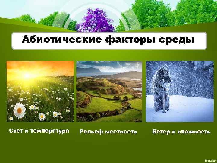 Абиотические факторы среды Свет и температура Рельеф местности Ветер и влажность