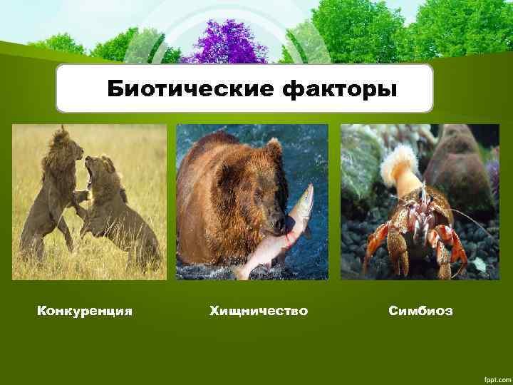Биотические факторы Конкуренция Хищничество Симбиоз