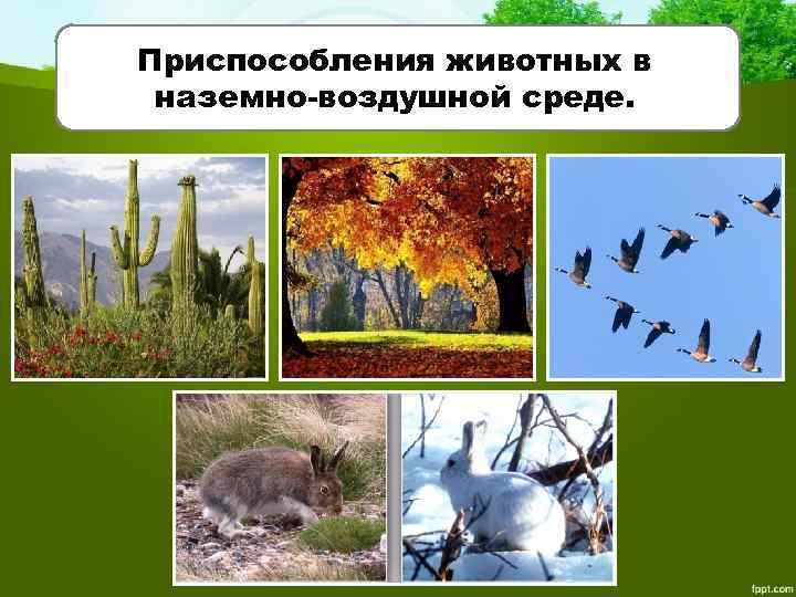 Приспособления животных в наземно-воздушной среде.