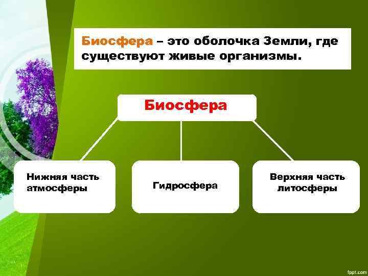 Биосфера – это оболочка Земли, где Биосфера существуют живые организмы. Биосфера Нижняя часть атмосферы