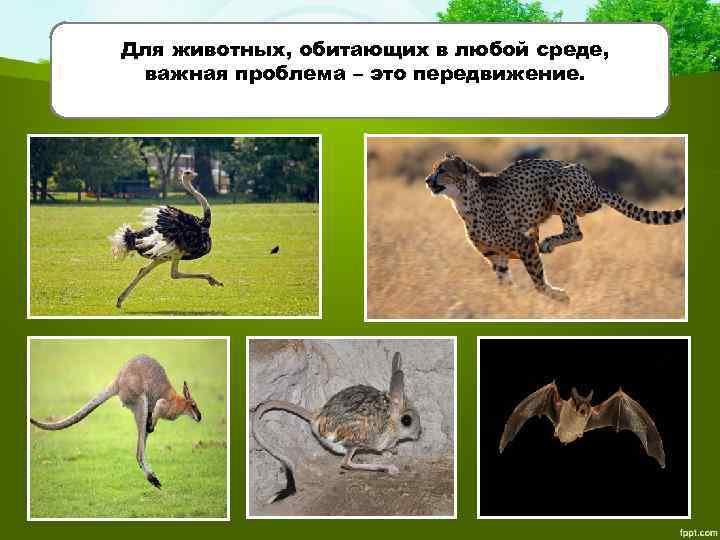 Для животных, обитающих в любой среде, важная проблема – это передвижение.