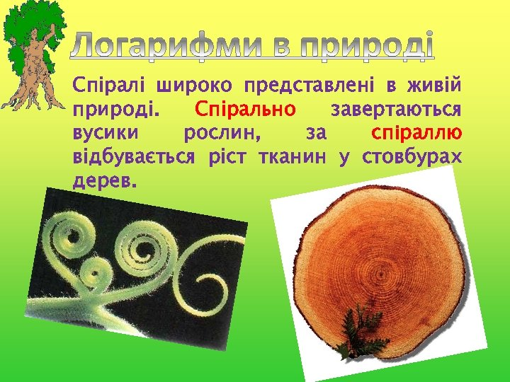 Спіралі широко представлені в живій природі. Спірально завертаються вусики рослин, за спіраллю відбувається ріст
