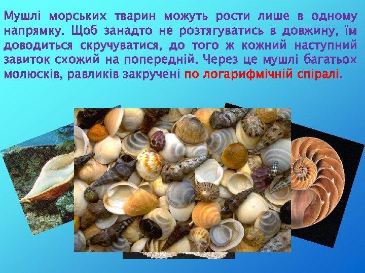 Мушлі морських тварин можуть рости лише в одному напрямку. Щоб занадто не розтягуватись в