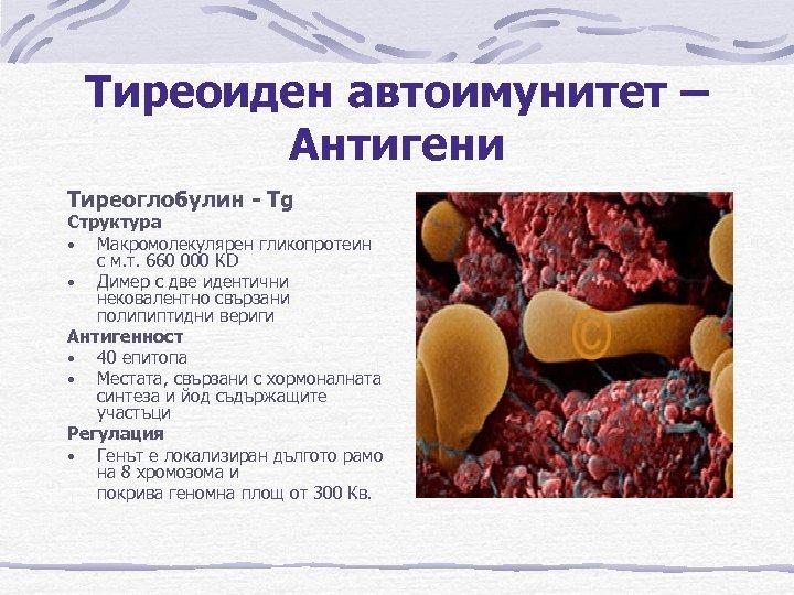Тиреоиден автоимунитет – Антигени Тиреоглобулин - Tg Структура • Макромолекулярен гликопротеин с м. т.