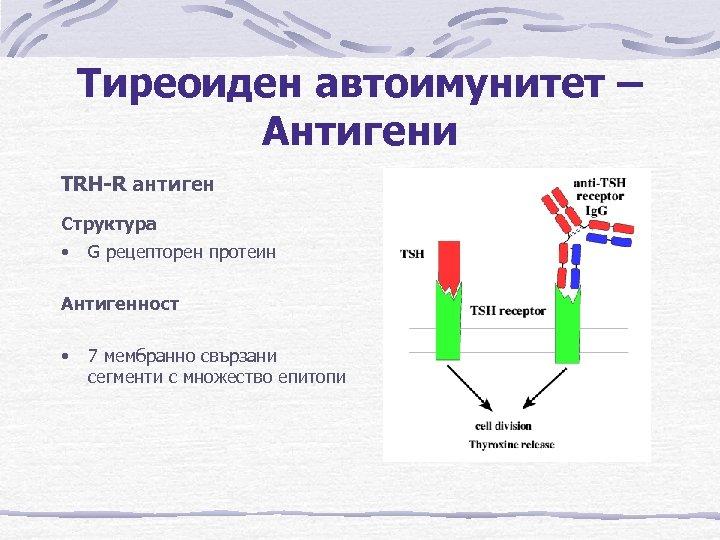 Тиреоиден автоимунитет – Антигени TRH-R антиген Структура • G рецепторен протеин Антигенност • 7