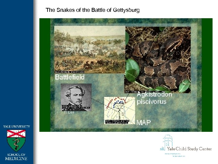 The Snakes of the Battle of Gettysburg