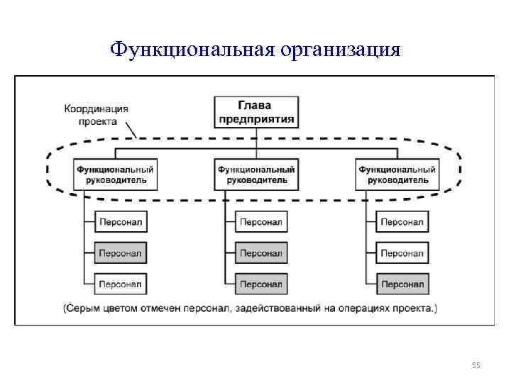Функциональная организация 55