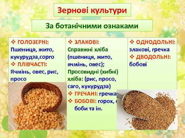 Зернові культури За ботанічними ознаками v ГОЛОЗЕРНІ: Пшениця, жито, кукурудза, сорго v ПЛІВЧАСТІ: Ячмінь,