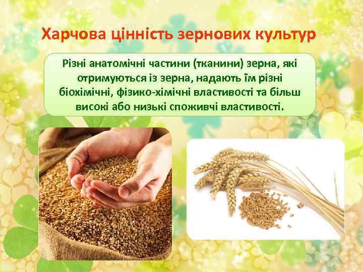 Харчова цінність зернових культур Різні анатомічні частини (тканини) зерна, які отримуються із зерна, надають