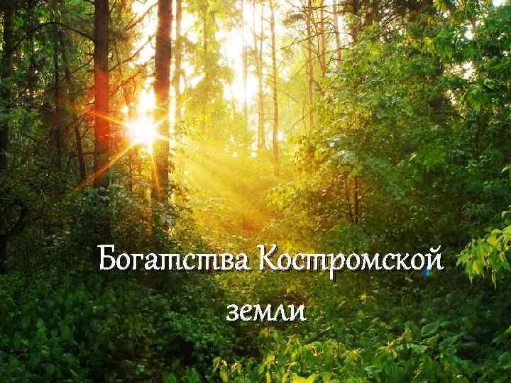 Богатства Костромской земли