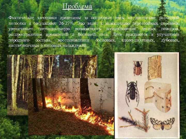 Проблема Фактические заготовки древесины за последние годы не достигают расчетной лесосеки и составляют 26