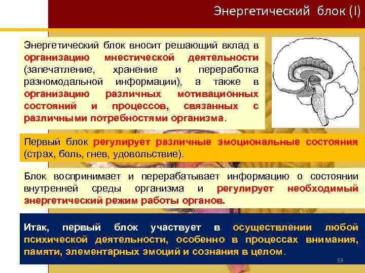 Энергетический блок (I) Энергетический блок вносит решающий вклад в организацию мнестической деятельности (запечатление, хранение