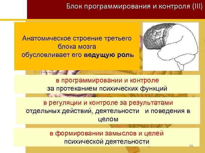 Блок программирования и контроля (III) Анатомическое строение третьего блока мозга обусловливает его ведущую роль