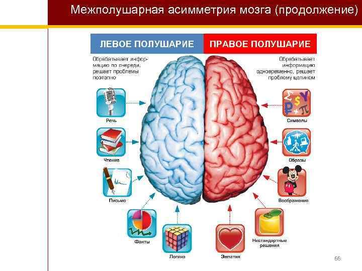 Межполушарная асимметрия мозга (продолжение) ЛЕВОЕ ПОЛУШАРИЕ ПРАВОЕ ПОЛУШАРИЕ 66