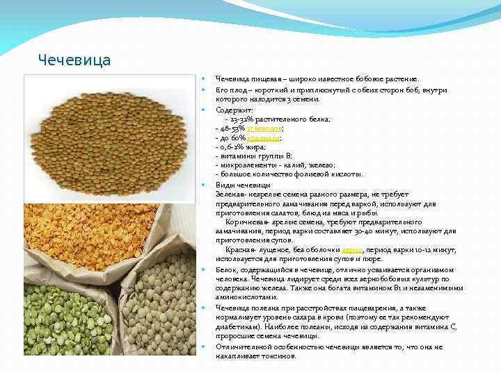 Чечевица Чечевица пищевая – широко известное бобовое растение. Его плод – короткий и приплюснутый