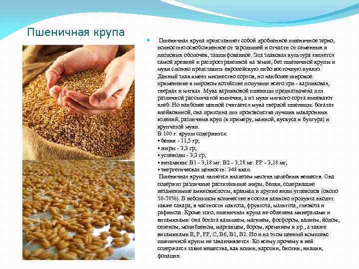 Пшеничная крупа представляет собой дробленное пшеничное зерно, полностью освобожденное от зародышей и отчасти от