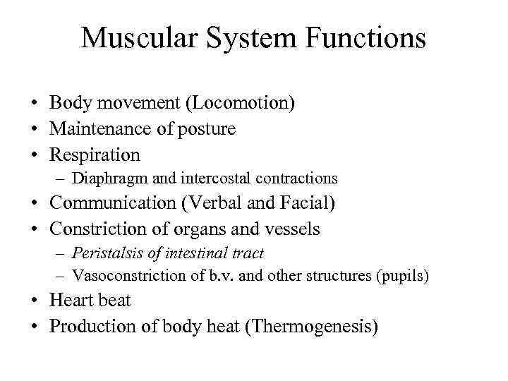 Skeletal Muscle Physiology Muscular System Functions