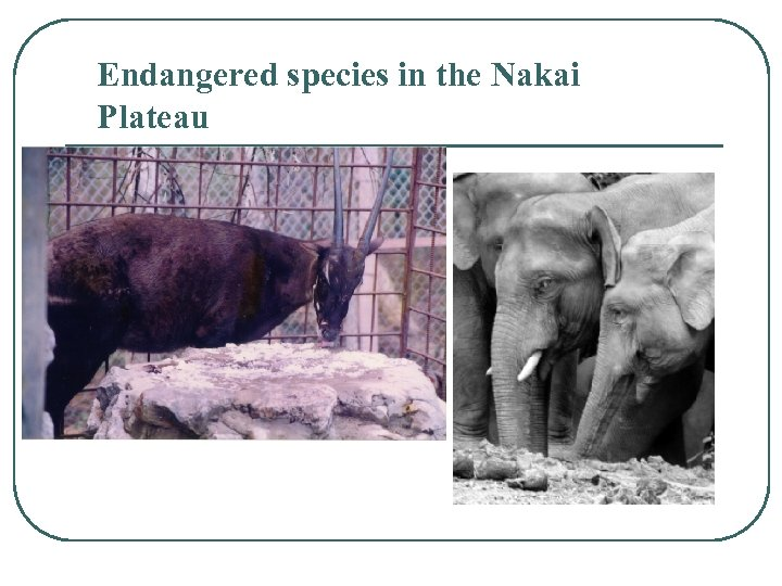Endangered species in the Nakai Plateau