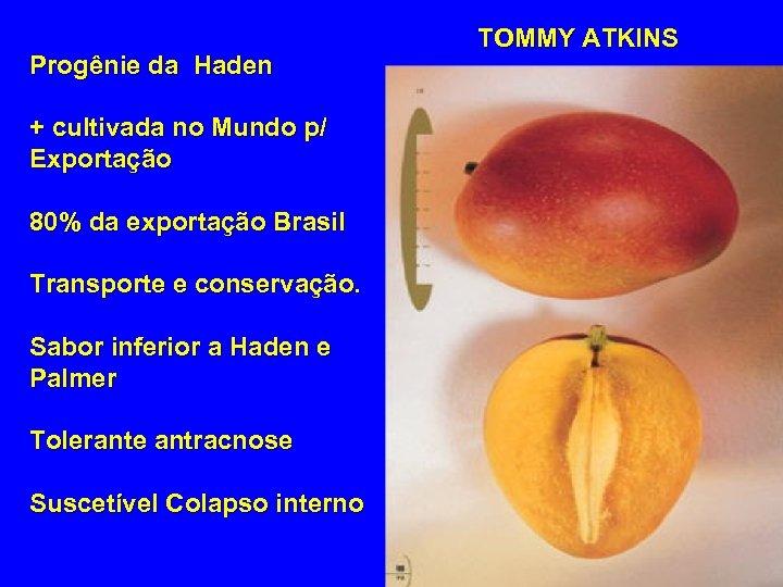Progênie da Haden + cultivada no Mundo p/ Exportação 80% da exportação Brasil Transporte
