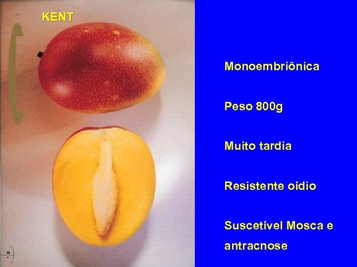 KENT Monoembriônica Peso 800 g Muito tardia Resistente oídio Suscetível Mosca e antracnose