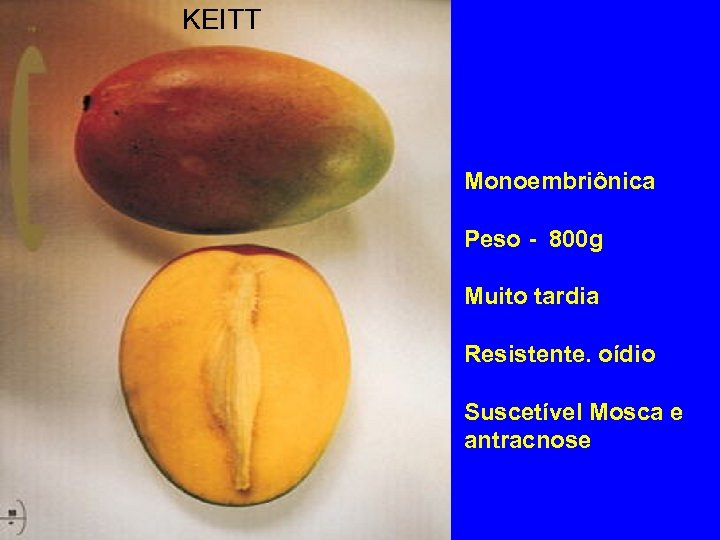 KEITT Monoembriônica Peso - 800 g Muito tardia Resistente. oídio Suscetível Mosca e antracnose