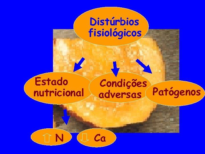 Distúrbios fisiológicos Estado nutricional N Condições adversas Patógenos Ca