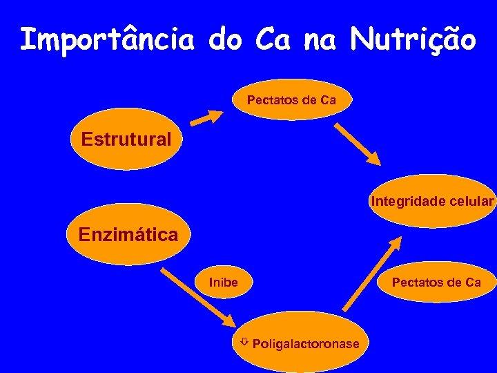 Importância do Ca na Nutrição Pectatos de Ca Estrutural Integridade celular Enzimática Pectatos de
