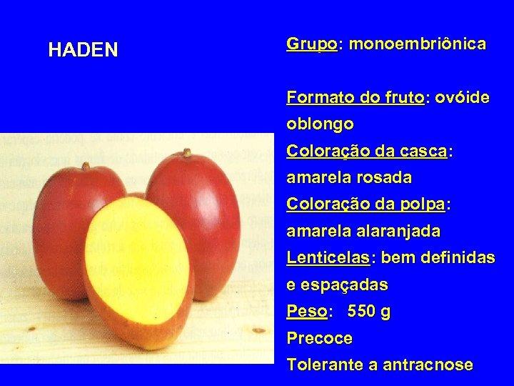 HADEN Grupo: monoembriônica Formato do fruto: ovóide oblongo Coloração da casca: amarela rosada Coloração