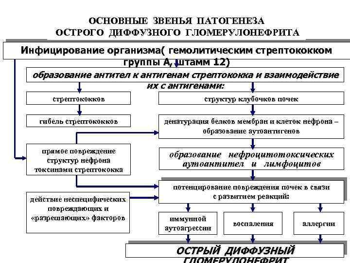 ОСНОВНЫЕ ЗВЕНЬЯ ПАТОГЕНЕЗА ОСТРОГО ДИФФУЗНОГО ГЛОМЕРУЛОНЕФРИТА Инфицирование организма( гемолитическим стрептококком группы А, штамм 12)