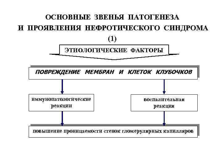 ОСНОВНЫЕ ЗВЕНЬЯ ПАТОГЕНЕЗА И ПРОЯВЛЕНИЯ НЕФРОТИЧЕСКОГО СИНДРОМА (1) ЭТИОЛОГИЧЕСКИЕ ФАКТОРЫ ПОВРЕЖДЕНИЕ МЕМБРАН И КЛЕТОК
