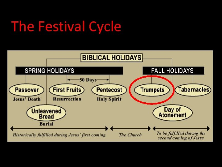 The Festival Cycle