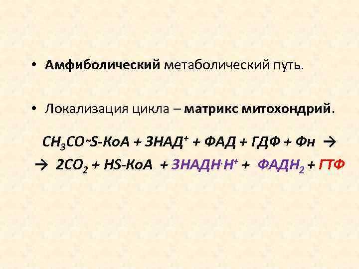 • Амфиболический метаболический путь. • Локализация цикла – матрикс митохондрий. СН 3 СО~S-Ко.