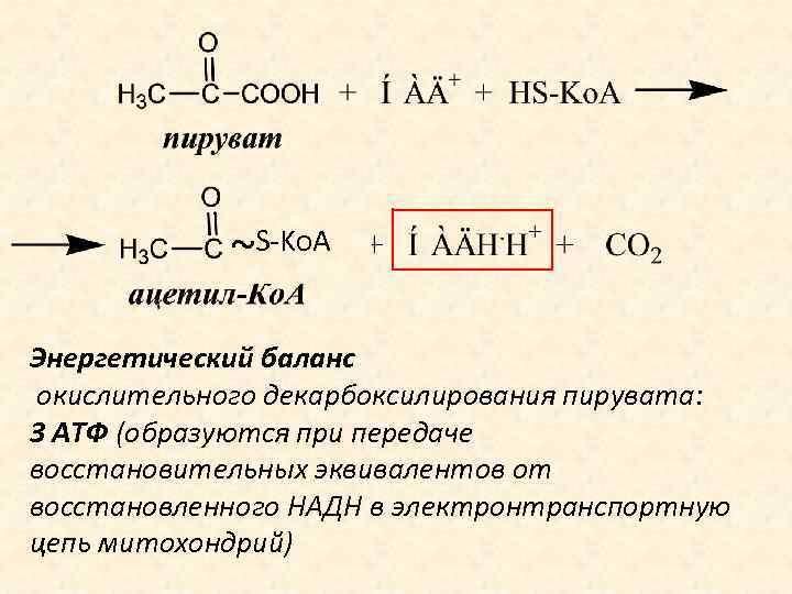 ~S-Ko. A Энергетический баланс окислительного декарбоксилирования пирувата: 3 АТФ (образуются при передаче восстановительных эквивалентов