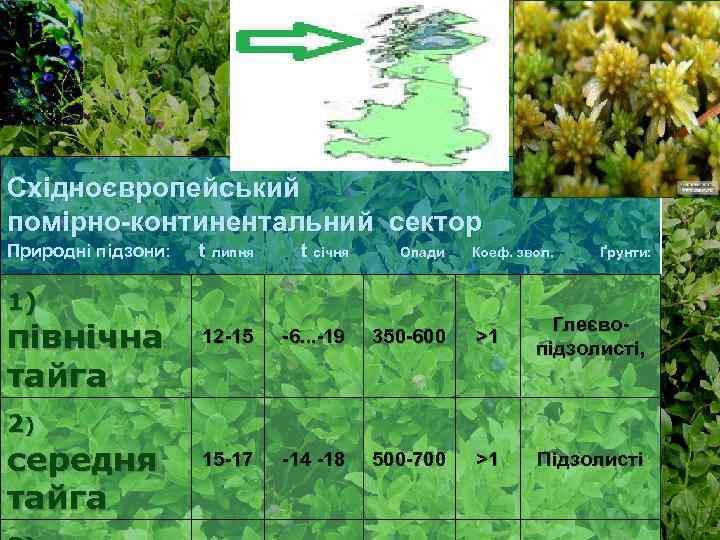 Східноєвропейський помірно-континентальний сектор Природні підзони: t липня t січня Опади 12 -15 -6. .