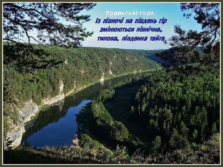 Уральські гори. Із півночі на південь гір змінюються північна, типова, південна тайга