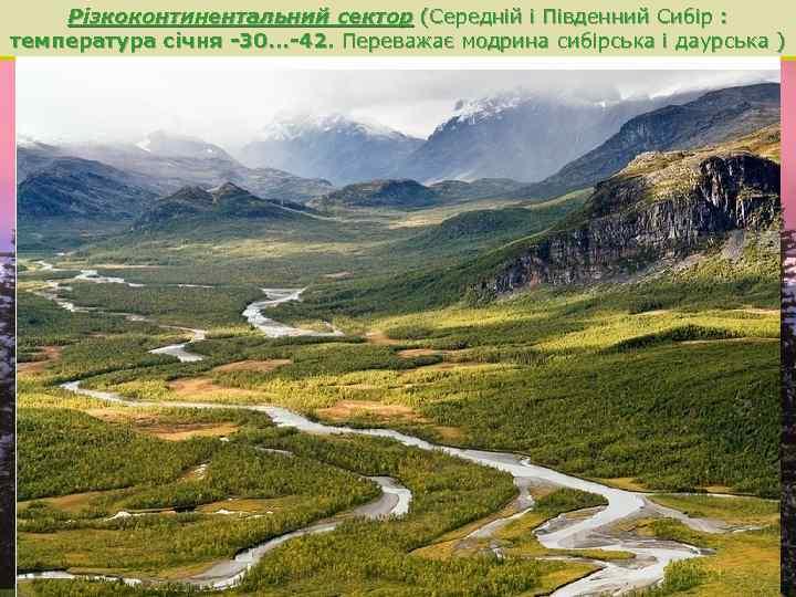 Різкоконтинентальний сектор (Середній і Південний Сибір : температура січня -30. . . -42. Переважає