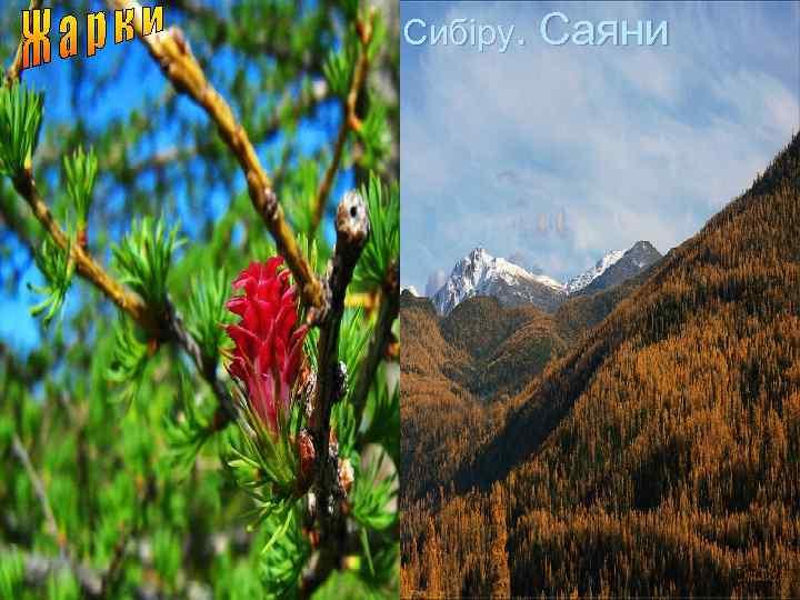 Гори Південного Сибіру. Саяни