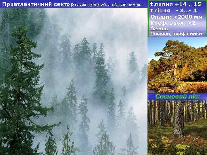 Приатлантичний сектор (дуже вологий, з м'якою зимою і t липня +14. . 15 прохолодним
