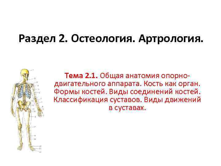 Раздел 2. Остеология. Артрология. Тема 2. 1. Общая анатомия опорнодвигательного аппарата. Кость как орган.