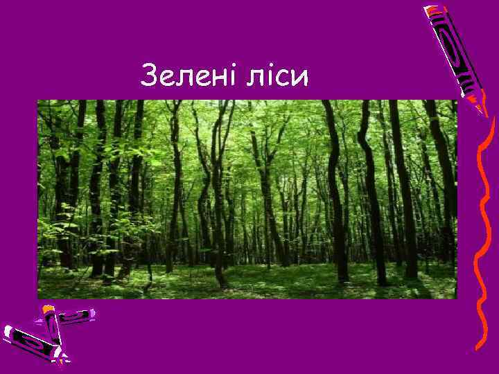 Зелені ліси