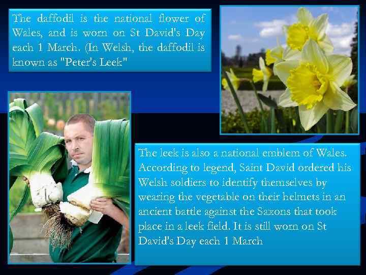 I'm as gay as a daffodil my dear